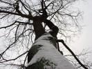 Fotografie, Baum, Schnee, Landschaft