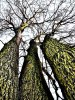 Fotografie, Landschaft, Baum