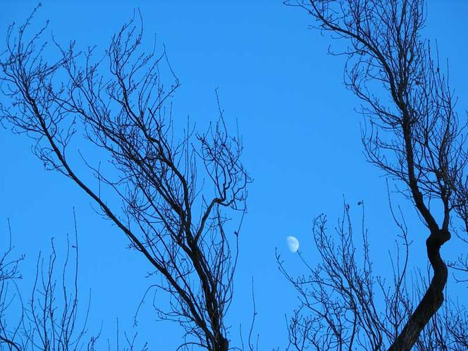Mond, Landschaft, Fotografie, Winter