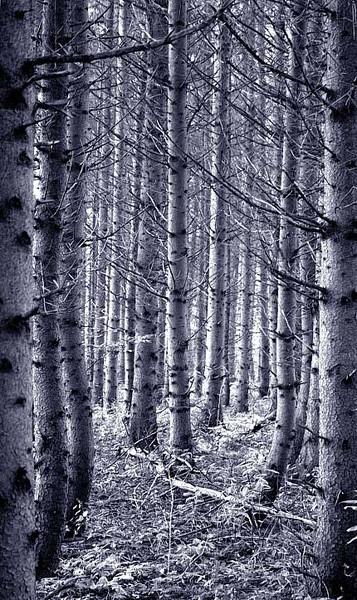 Fichte, Wald, Baum, Fotografie, Pflanzen, Richtung