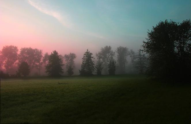 Aufwachen, Wiese, Morgen, Baum, Fotografie, Landschaft
