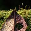 Herbst, Grün, Stillleben, Spooren