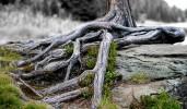 Fotografie, Reiseimpressionen, Baum, Felsen
