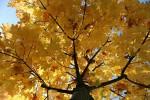 Äste, Baum, Fotografie, Zweig