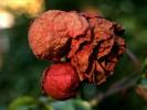 Fotografie, Herbst, Stillleben