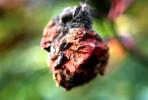Stillleben, Blumen, Fotografie, Herbst