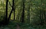 Wald, Baum, Fotografie, Weg