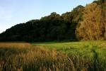 Herbst, Landschaft, Wald, Wiese