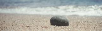 Strand, Fotografie, Stillleben, Tiere