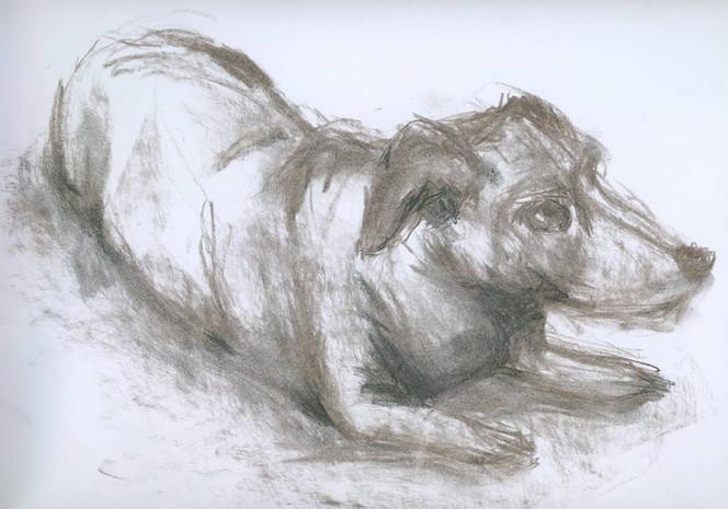 Hund, Zeichnung, Skizze, Zeichnungen,