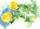 Protsenko, Natur, Rose, Malerei