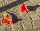 Kontrast, Blätter, Rot, Stillleben