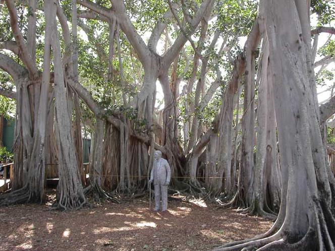 Myers, Urlaub, Fotografie, Edison, Baum, Reiseimpressionen