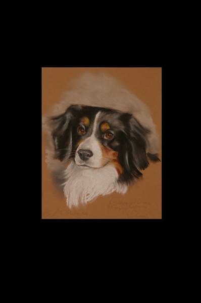 Tierportrait, Pastellmalerei, Zeichnung, Kreide, Portrait, Zeichnungen