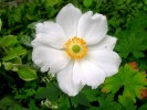Fotografie, Gartenpflanzen