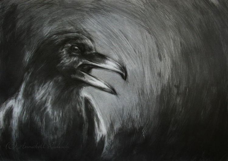 Dunkel, Vogel, Krähe, Grafit, Rabe, Zeichnungen