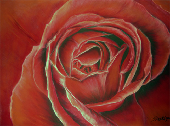 Rose, Blumen, Rot, Zeichnungen, Portrait
