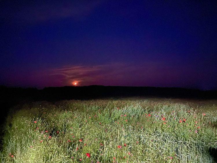 Mondbluten, Sternenwanderung, Mohnblumen, Fotografie, Mond