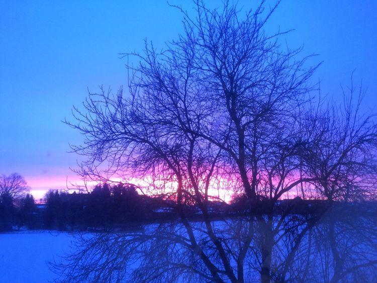 Morgenbaum, Sonnenaufgang, Schneefeld, Fotografie, Vergessen