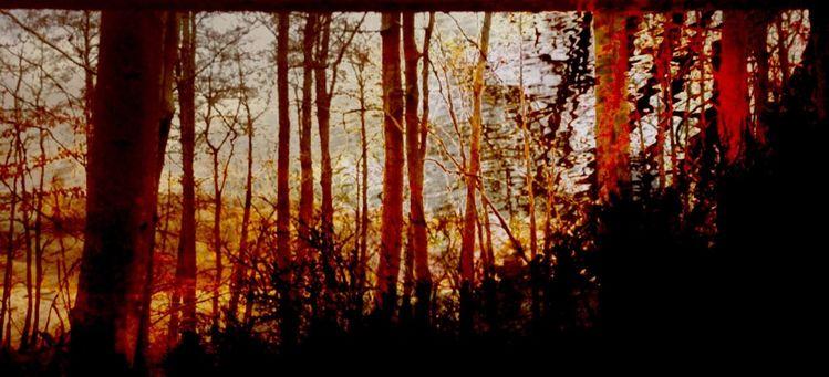 Baum, Rhythmus, Sonne, Abend, Mischtechnik