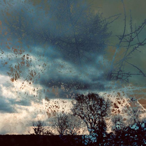 Strauch, Himmel, Erde, Baum, Mischtechnik