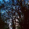 Baumwesen, Zwischenraum, Nacht, Fotografie