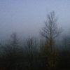 Strauch, Baum, Nebel, November