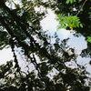 Blattgrün, Wasser, Raum, Fotografie