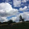 Tanz, Himmel, Baum silhouetten, Wolken