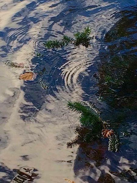 Kreis, Wasser, Blätter, Tannenzweige, Fotografie