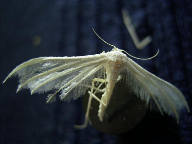 Fotografie, Stillleben, Schmetterling