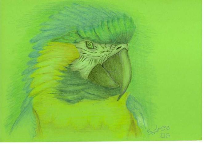 Zeichnung, Gelb, Blau, Polychromos, Papagei, Grün