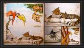 Trompe, Meer, Leopard, Leoil