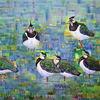 Vogel, Ölmalerei, Kiebitze, Malerei