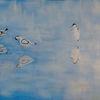 Ölmalerei, Säbelschnäbler, Avocet, Wasser