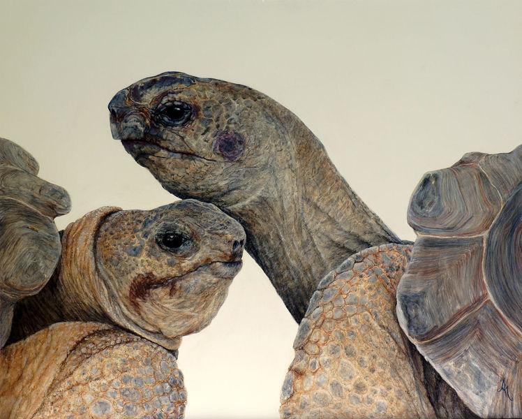 Tierwelt, Augen, Realismus, Tortoise, Schildkröte, Tiere