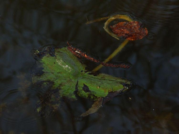 See, Blätter, Spiegelung, Abendlicht, Fotografie