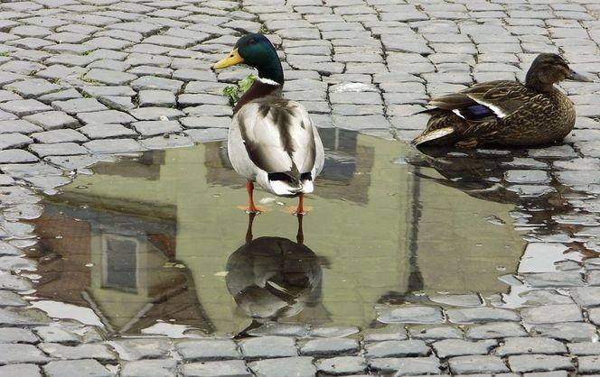 Spiegelung, Fotografie