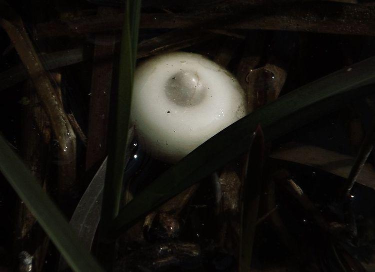 Morast, Schilf, Pilze, Weiß, Sumpf, Fotografie