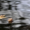 Spiegelung, November, See, Blätter