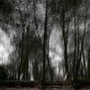 See, Spiegelung, Optische täuschung, Wald