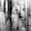 Wald, Frost, Schnee, Winter