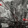 Schwarz, Grau, Rot, Fotografie