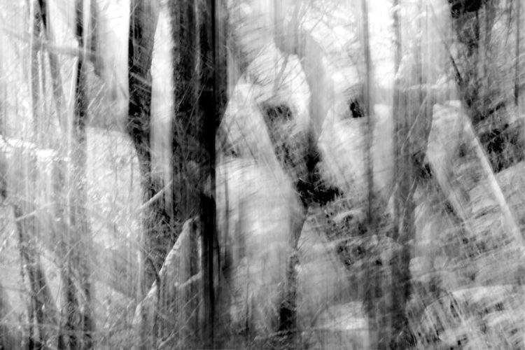 Winter, Wald, Frost, Schnee, Fotografie