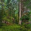 Ölmalerei, Landschaft, Ölfarben, Sommer