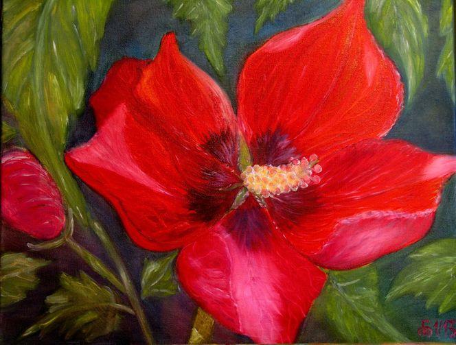 Blüte, Gartenblume, Gelb, Hibiskus, Rot, Sommer