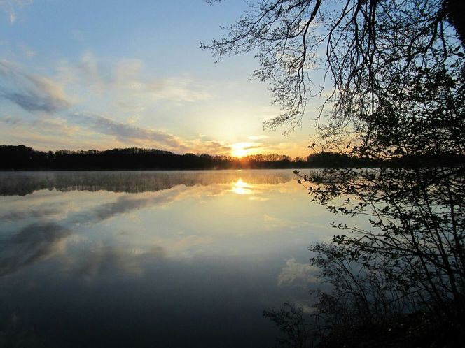 Sonnenaufgang, Spiegelung, Wasser, Baum, Naturschutz, Ruhe