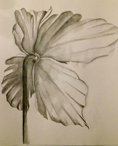 Schwarzweiß, Pflanzen, Blüte, Aquarell
