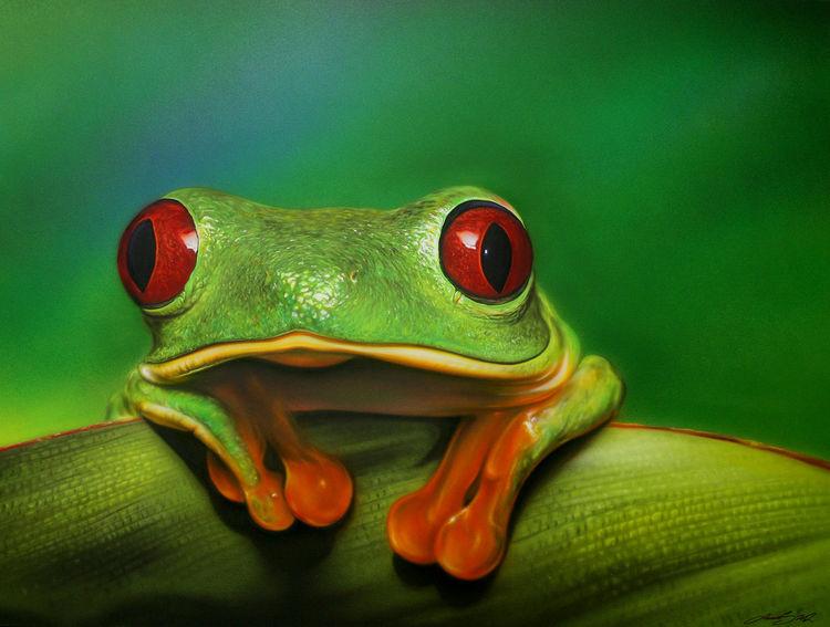 Rotaugenfrosch, Frosch, Laurusart, Airbrush, Zoofitti, Sprühdose
