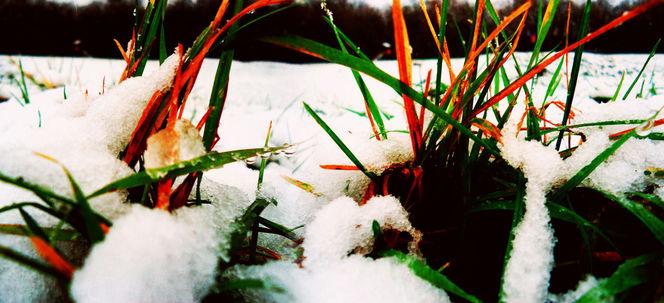 Licht, Fotografie, Weiß, Gras, Digitally, Stimmung